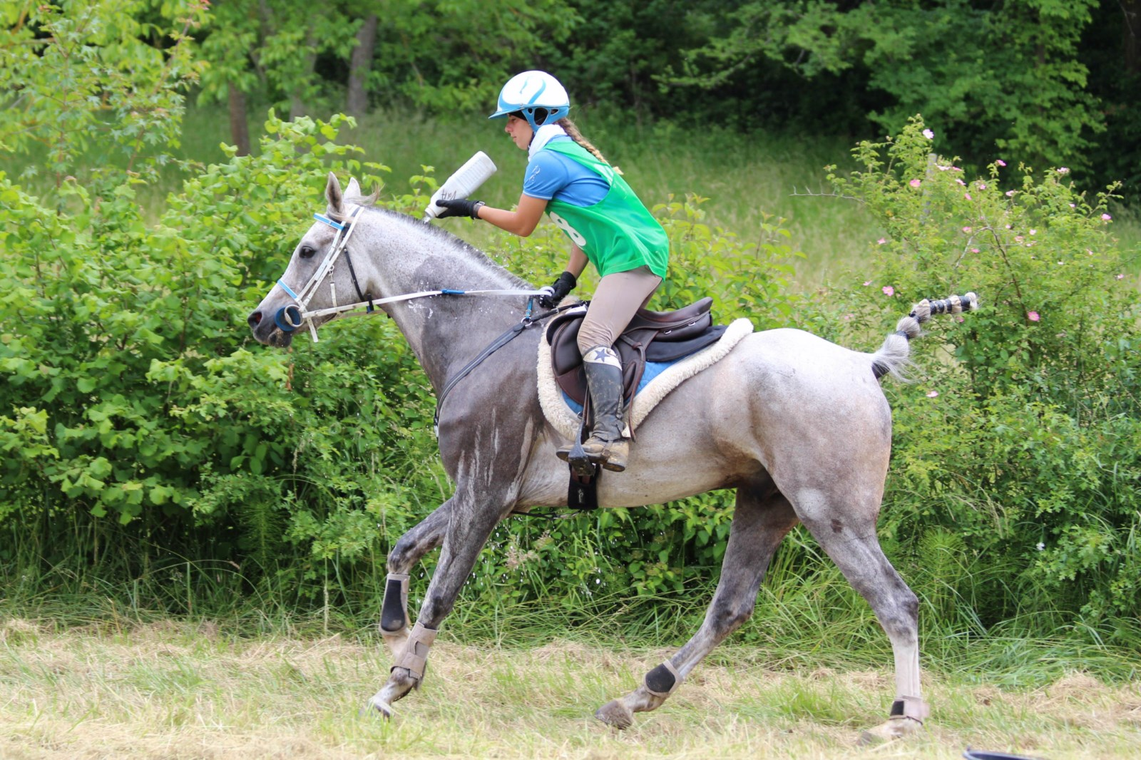cheval arabe endurance